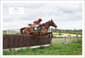 Horse-mid-air