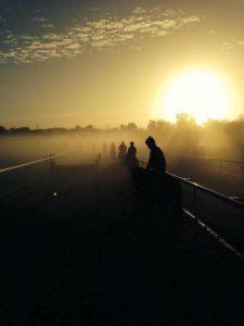 horses-morning